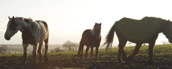 Three horse silhouettes.