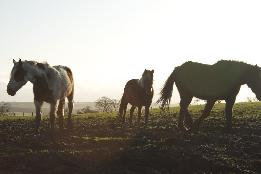Three horse silhouettes.