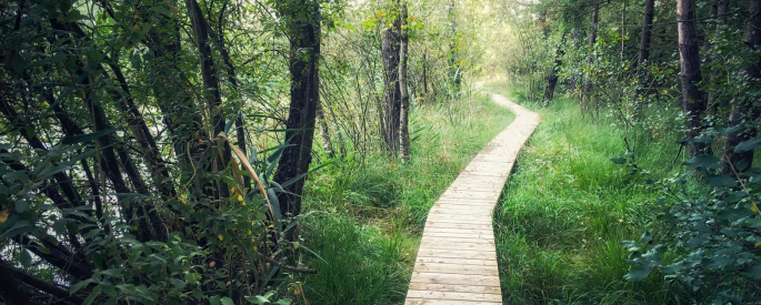 A wooden path winds through a green forest.