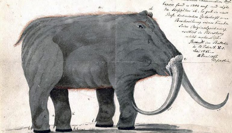Drawing of a mammoth with notes scribbled around it