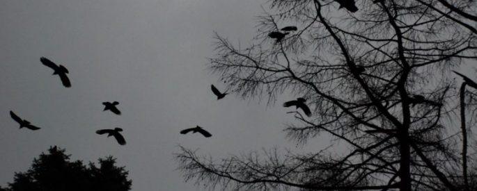 dark photo of black birds flying from a tree