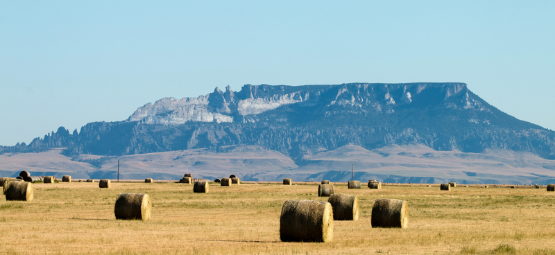 a photograph of rolled hay with a mountain in the distance