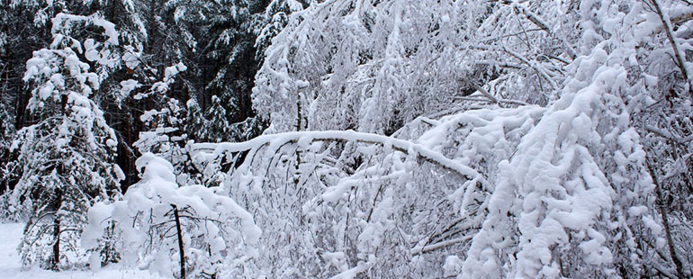 a scene in a snowy forest featuring trees laden and heavy with white snow and ice