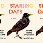 side by side series of the cover of Starling Days by Rowan Hisayo Buchanan