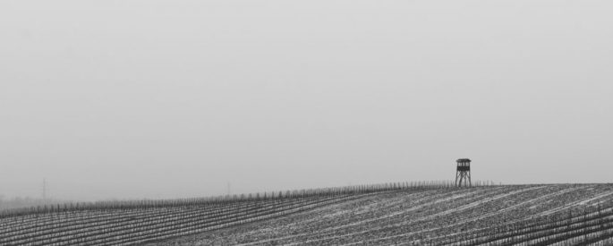 black and white photograph of frost-covered vineyard rows and small wooden tower on the right side, the sky appears to be foggy, or misty