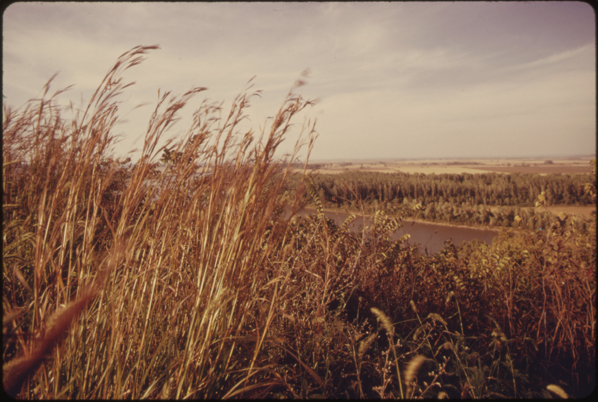 a film photograph of a landscape, which appears to have been taken at dusk--the photo has a gold hue, close to the camera to the left of the image are tall, brown grasses, the background of the photo is a lake and pines beyond