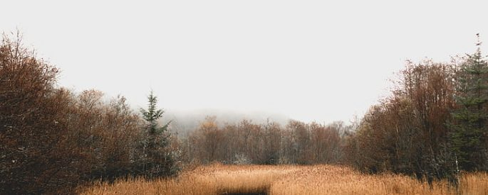 photograph of a gray sky, barren trees and a few tall pines against a bog with dried grasses