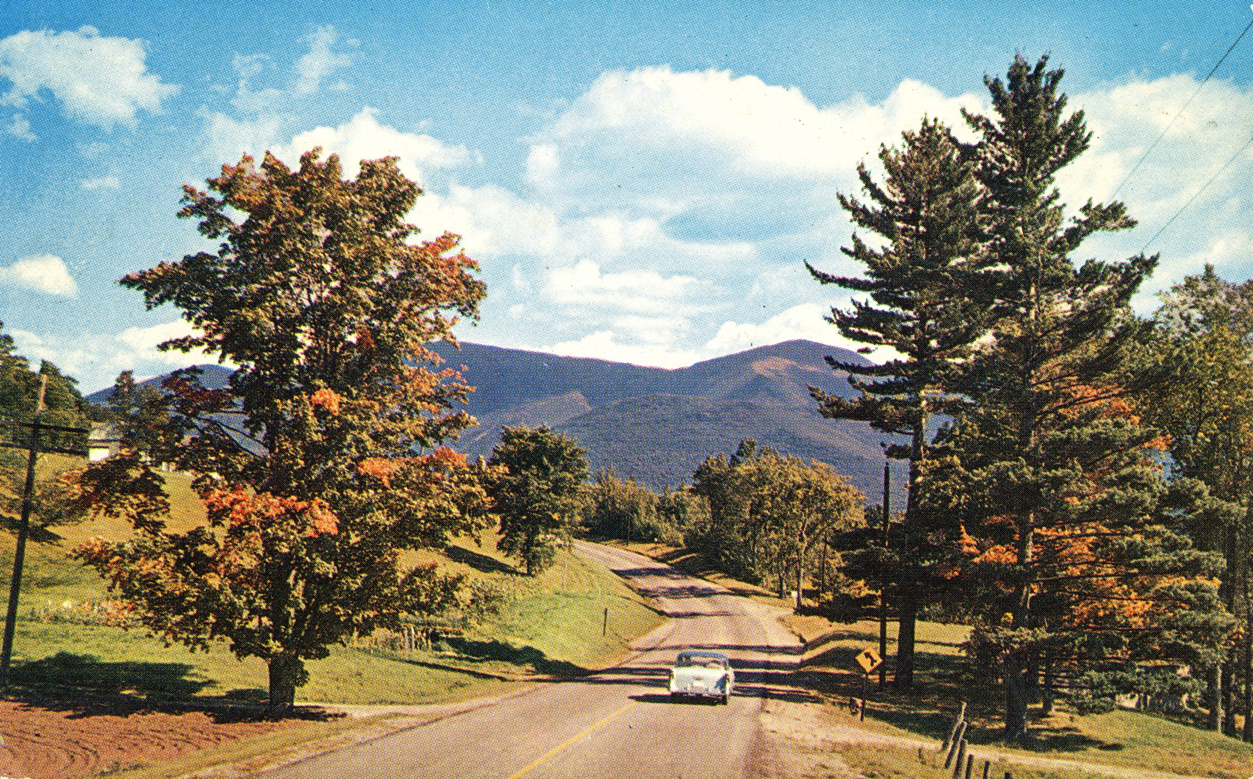 Vintage film photo of an autumnal tree lined road with a car driving down it